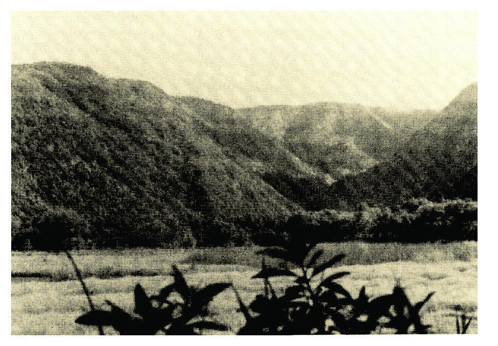 Hawaiian Adze Production and Distribution